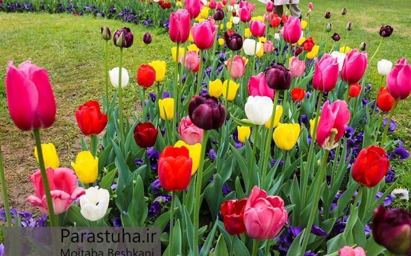 نمایی از گل آرایی در پارک ملت مشهد