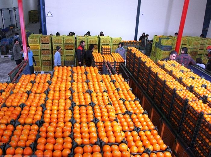 142 تن میوه با نرخ مصوب در خراسان رضوی توزیع شد