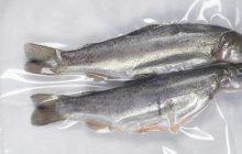 دستیابی به دانش فنی پایش فساد ماهی با استفاده از نانو سنسور های حساس به pH